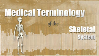 HST-MT - Medical Terminology of the Skeletal System