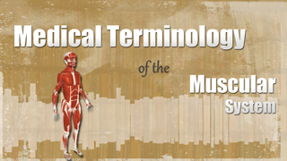 HST-MT - Medical Terminology of the Muscular System