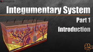 HST-AP Integumentary System Pt. 1