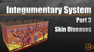 HST-AP Integumentary System Pt. 3