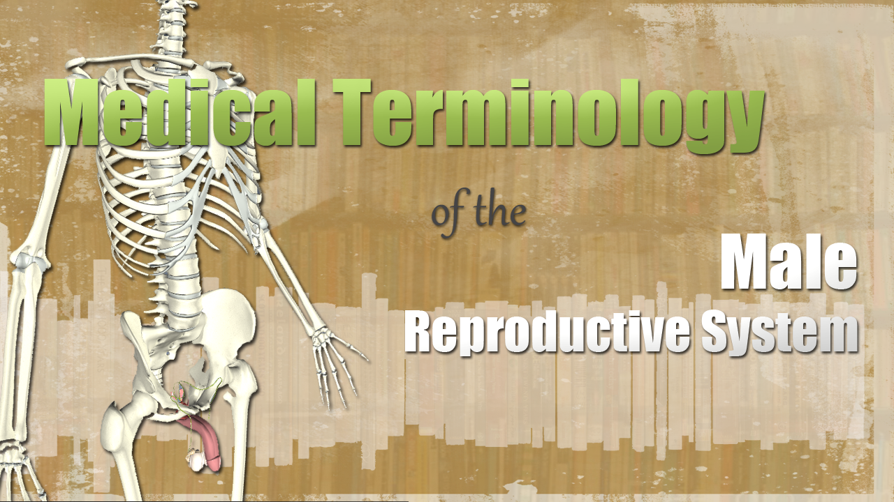 HST-MT-Medical Terminology of the Male Reproductive System