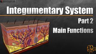 HST-AP Integumentary System Pt. 2