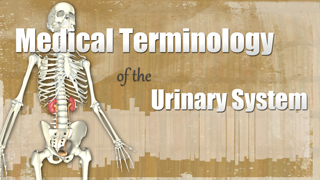 HST-MT - Medical Terminology of the Urinary System