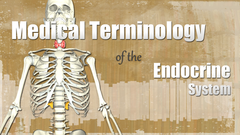 HST-MT - Medical Terminology of the Endocrine System