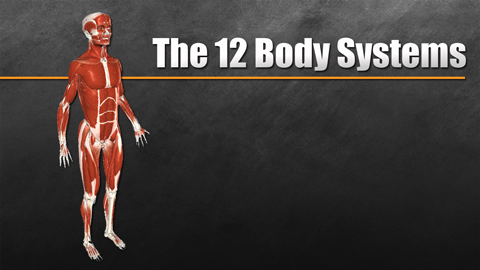 The Twelve Body Systems